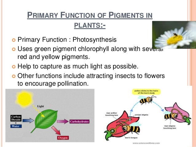 pigments and photsynthesis Photosynthesis is a process used by cannot receive the correct wavelengths required to cause photoinduced charge separation in conventional photosynthetic pigments.
