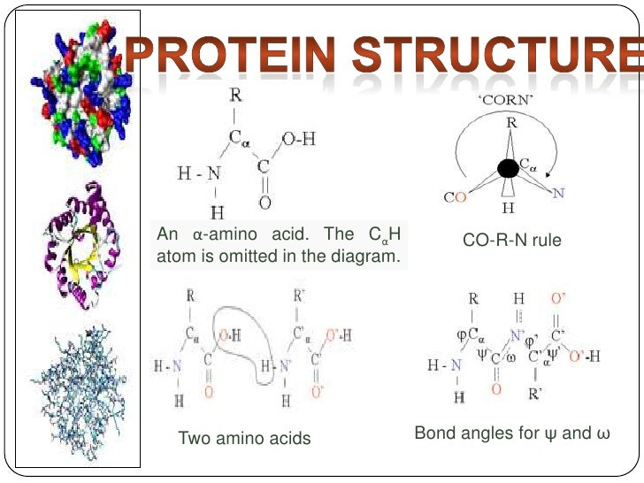 protein structure<br