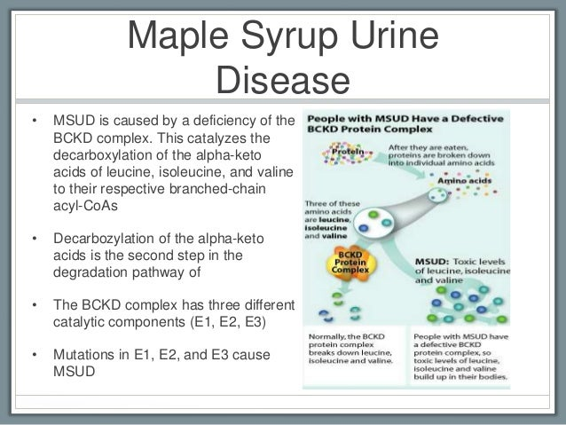 maple syrup urine disease Maple syrup urine disease or msud is a condition in which the body is unable to break down the amino acids leucine, isoleucine and valine found in proteins this condition can be life-threatening and result in death, however with a strict dietary treatment the life expectancy can be long and healthy.
