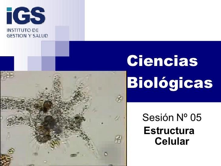 Ciencias Biológicas Sesión Nº 05 Estructura  Celular
