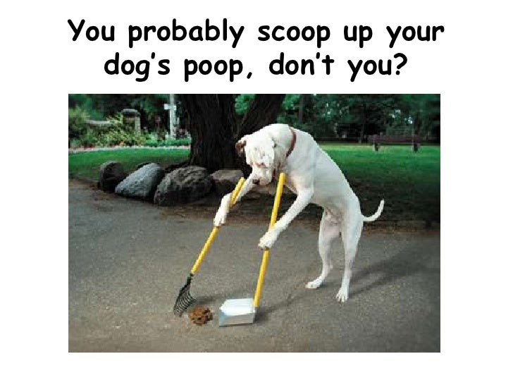 You probably scoop up your dog's poop, don't you?<br />
