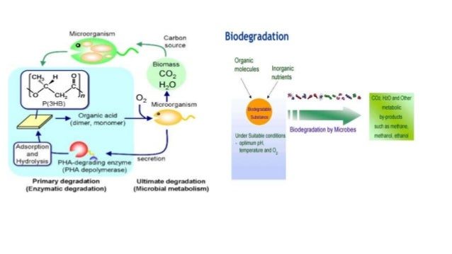 biodegradation of xenobiotics Microbial transformation of xenobiotics  yet a comprehensive understanding of the microbial biodegradation of xenobiotics  african journal of biotechnology.