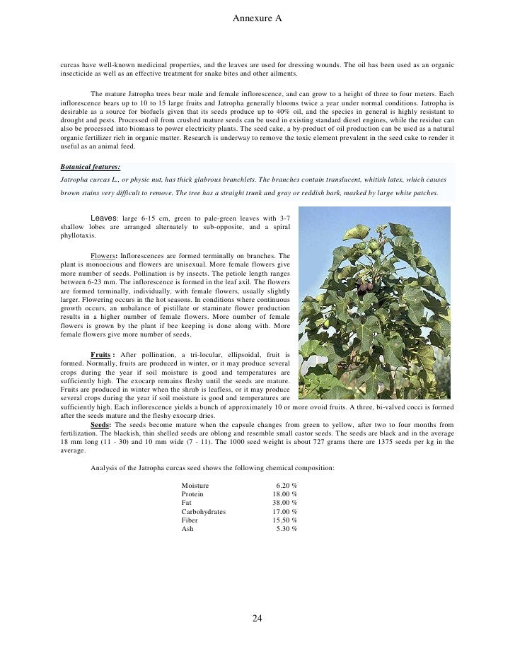 jatropha curcas research papers Research paper evaluation of genetic diversity of jatropha curcas l using rapd marker in maharashtra kd gopale 1, and rs zunjarrao 1.