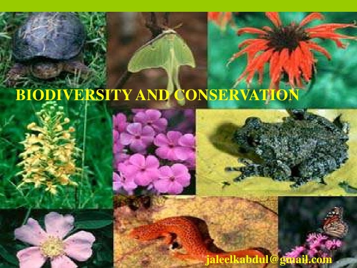 BIODIVERSITY AND CONSERVATION<br />BIODIVERSITY ANDCONSERVATION<br />jaleelkabdul@gmail.com<br />