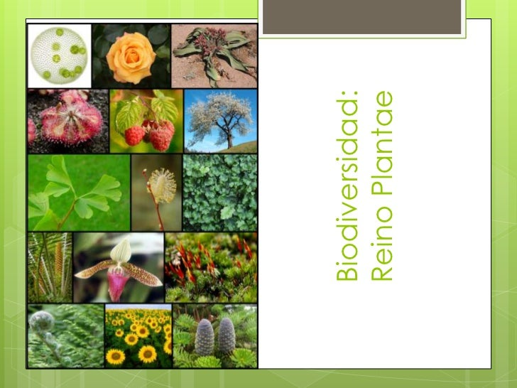 Biodiversidad:Reino Plantae