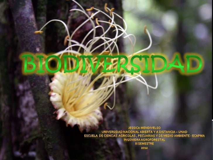 En Colombia un País lleno de riqueza Natural,con los paisajes más hermosos del planeta, conel plumón del mundo como escena...