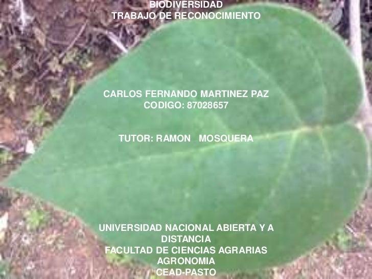 BIODIVERSIDAD  TRABAJO DE RECONOCIMIENTOCARLOS FERNANDO MARTINEZ PAZ       CODIGO: 87028657   TUTOR: RAMON MOSQUERAUNIVERS...