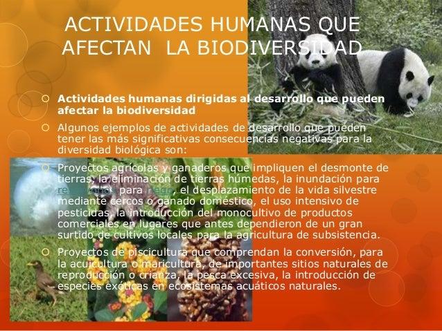  Proyectos forestales que incluyan la construcción de caminos de acceso,    explotación forestal intensiva, establecimien...