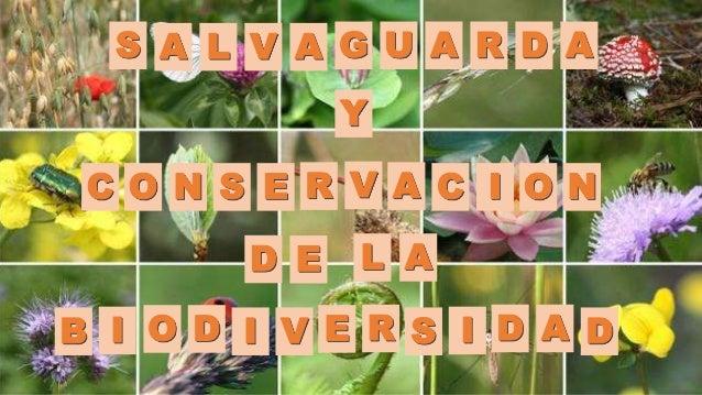 CONSERVACION DE LA BIODIVERSIDAD EPUB