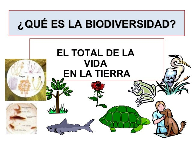 Biomass Pyramid besides Pyramid Of Energy furthermore Population Density Density Dependent Controls A Limits Populations That Are Too High moreover Tem eb further Ecology Thumb. on trophic levels bio