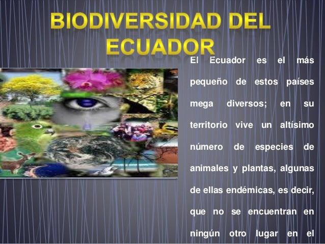 El Ecuador es el más pequeño de estos países mega diversos; en su territorio vive un altísimo número de especies de animal...