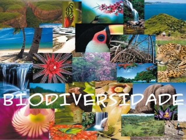 "O que é Biodiversidade?Bio"" significa ""vida"" e diversidade significa""variedade"". Então, biodiversidade ou diversidadebioló..."