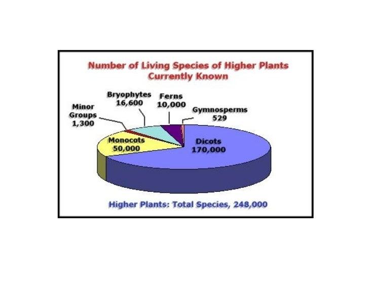 Porque é a perda de      biodiversidade uma crise Perda de valor económico Perda de benefícios ecológicos Ecossistemas fic...