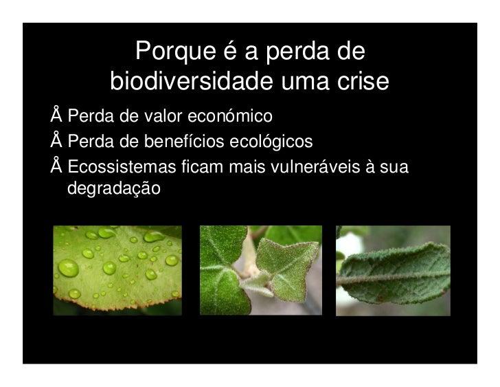 Introdução de espécies exóticas  Espécies não nativas da área onde foram  introduzidas.