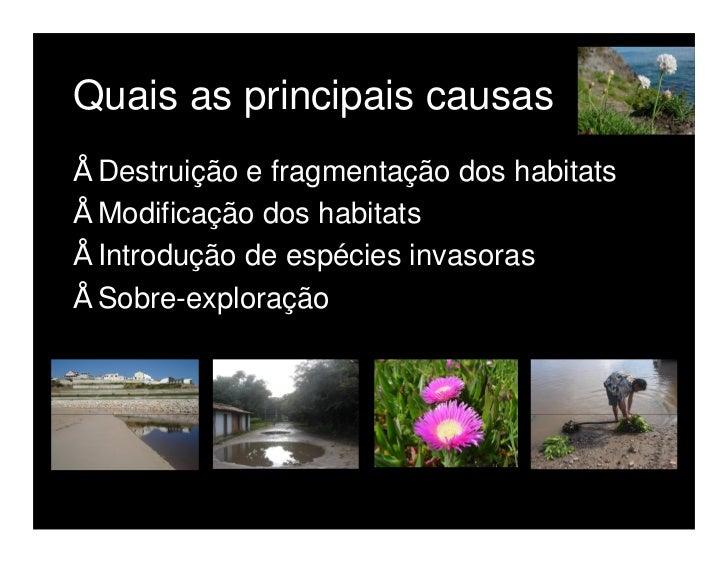 3. Porquê preservar a biodiversidade    Motivos éticos e culturais   Benefícios económicos imediatos   Benefícios indirectos