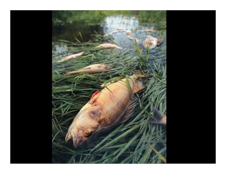 As larvas de muitos peixes e mariscos desenvolvem-se em estuários, sapais, ou mangais. Estes juvenis irão enriquecer os st...