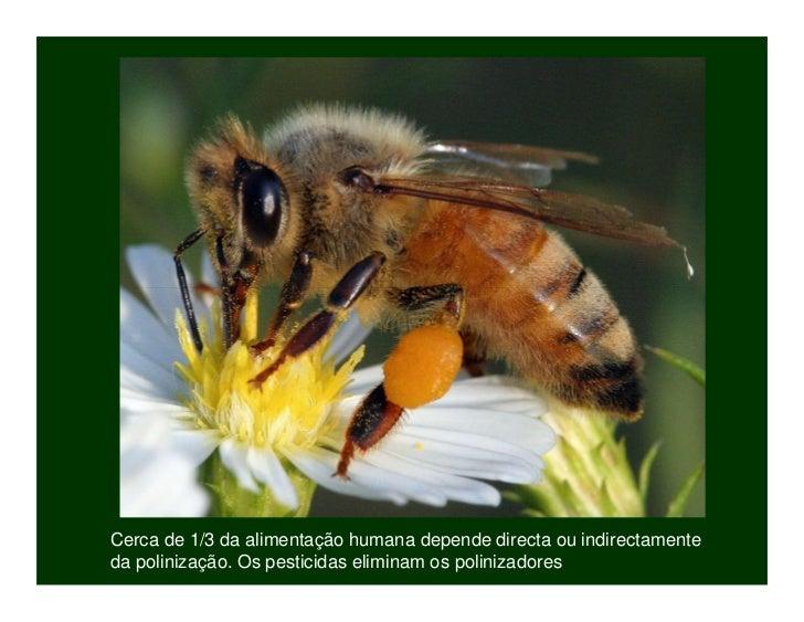 Biodiversidade ppt