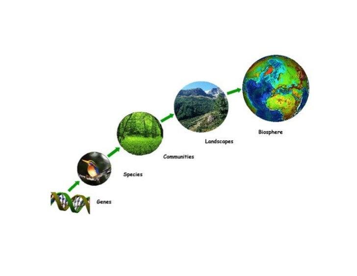 1. O que é a Biodiversidade   A Diversidade Biológica significa a variabilidade  entre os seres vivos provenientes de toda...