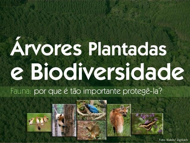 Foto: Klabin/ Zig Koch Árvores Plantadas e Biodiversidade Fauna: por que é tão importante protegê-la?