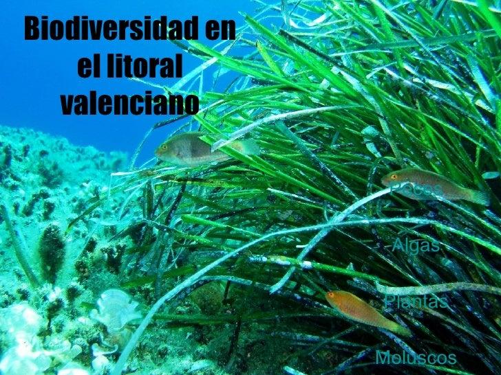 Biodiversidad en el litoral valenciano Peces Algas Plantas Moluscos
