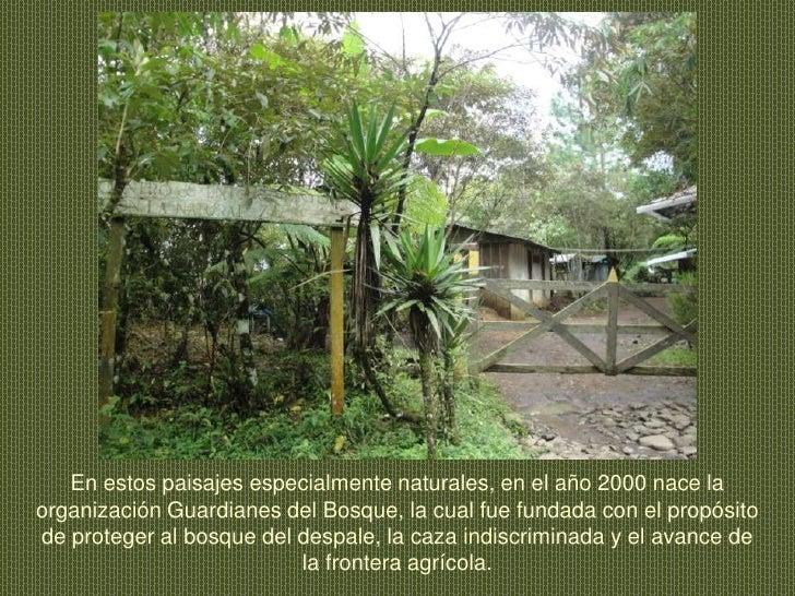En estos paisajes especialmente naturales, en el año 2000 nace la organización Guardianes del Bosque, la cual fue fundada ...