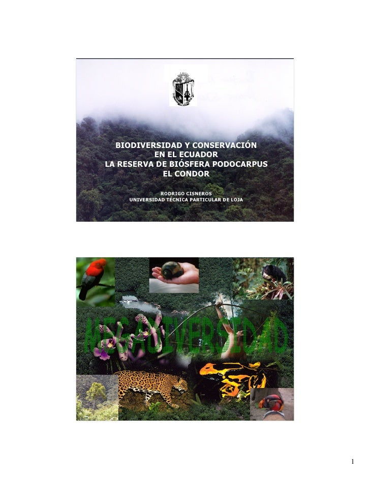 BIODIVERSIDAD Y CONSERVACIÓN           EN EL ECUADOR LA RESERVA DE BIÓSFERA PODOCARPUS             EL CONDOR              ...