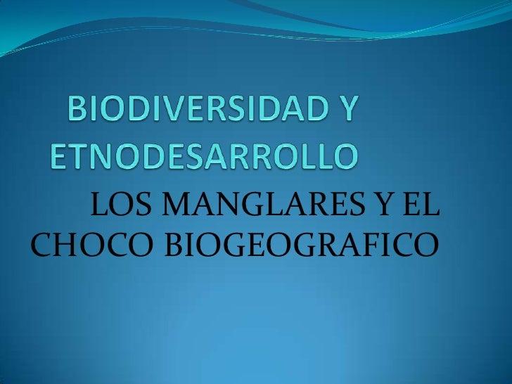BIODIVERSIDAD Y ETNODESARROLLO<br />LOS MANGLARES Y EL CHOCO BIOGEOGRAFICO<br />