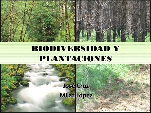 BIODIVERSIDAD Y PLANTACIONES BIODIVERSIDAD Y PLANTACIONES José CruzJosé Cruz Milza LópezMilza López
