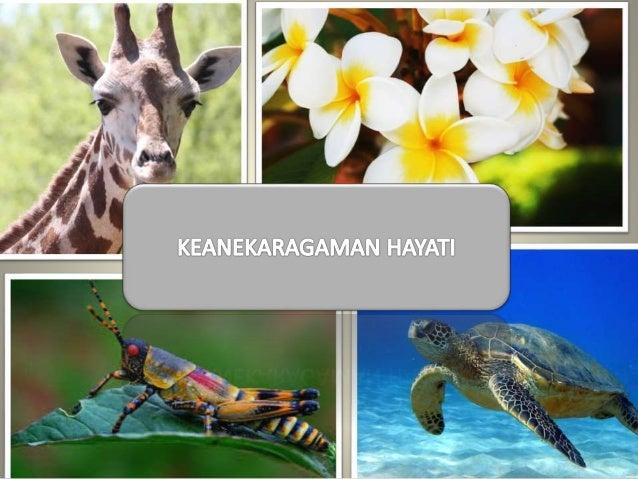 PEMBAHASAN Enjoy our presentation! TINGKATAN MANFAAT BIODIVERTAS INDONESIA KEGIATAN MANUSIA PELESTARIAN KLASIFIKASI MAKHLU...