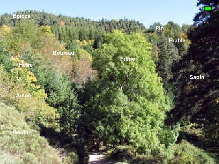 """La biodiversité Un thème scientifique proposé pour des projets sur l'environnement """" La diversité biologique, ou biod..."""