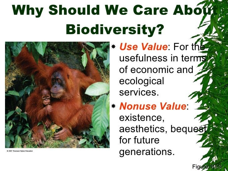 biodiversity natural environment and old growth Bio diversity and it's loss in growth biodiversity is the degree of variation of life forms within a given species,  biodiversity: natural environment and old growth.