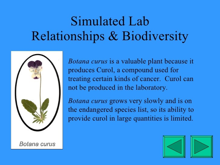 Simulated Lab Relationships & Biodiversity Botana curus  is a valuable plant because it produces Curol, a compound used fo...