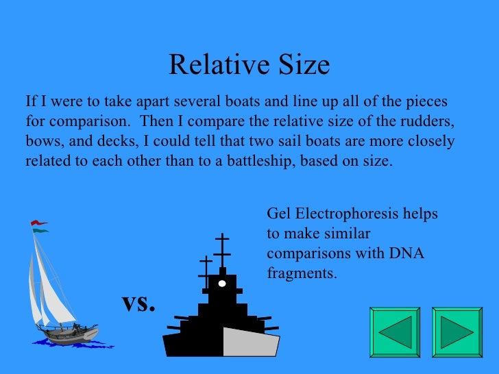 Relative Size If I were to take apart several boats and line up all of the pieces for comparison.  Then I compare the rela...
