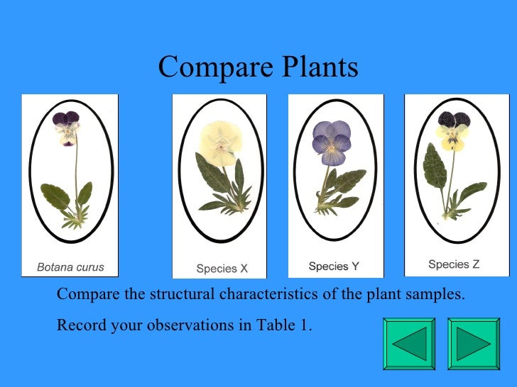 Compare Plants Compare the structural characteristics of the plant samples. Record your observations in Table 1.