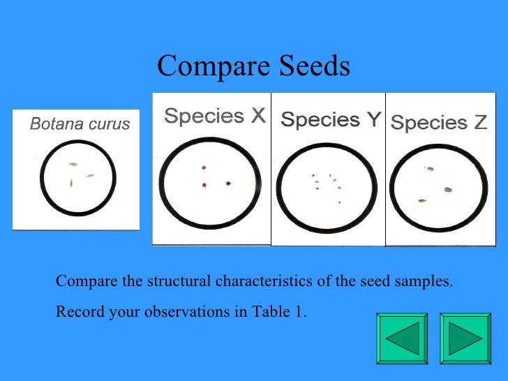 Compare Seeds Compare the structural characteristics of the seed samples. Record your observations in Table 1.