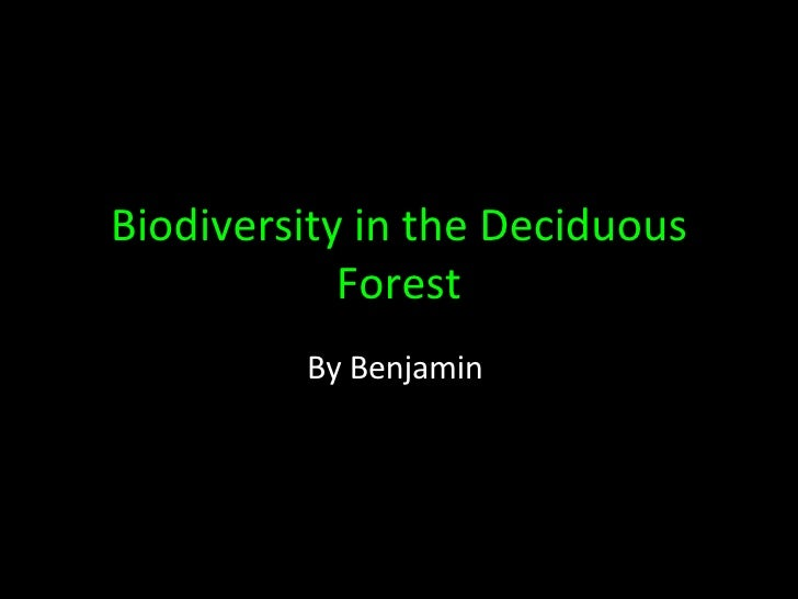 Biodiversity in the Deciduous Forest By Benjamin