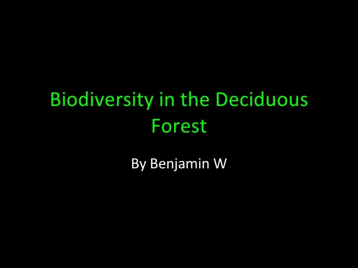Biodiversity in the Deciduous Forest By Benjamin W