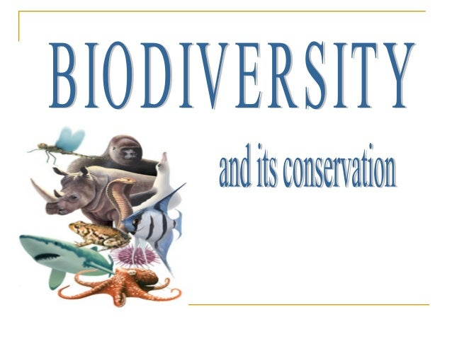  INTRODUCTION:  Biodiversity is the variety of life on earth  It includes all life forms-from the unicellular fungi, pr...