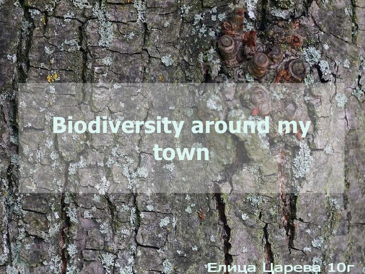 Biodiversity around my town Елица Царева 10г