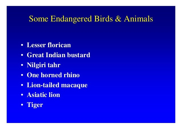 Which one of the following is important strategy for the conservation of biodiversity