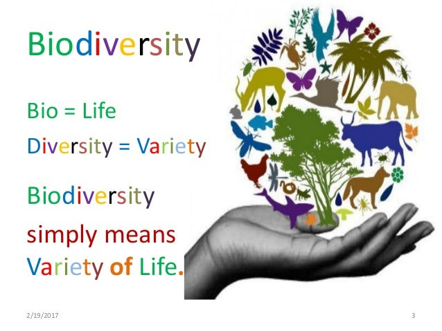 An examination of biodiversity and its benefits to life