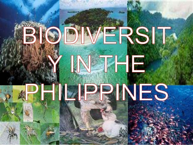 bio diversity Biodiversity is the variety of life it can be studied on many levels at the highest level, one can look at all the different species on the entire earth.