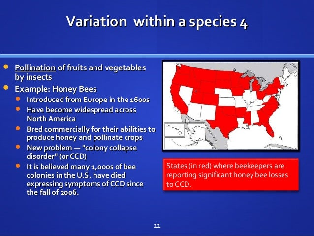 Variation within a species 4Variation within a species 4  PollinationPollination of fruits and vegetablesof fruits and ve...