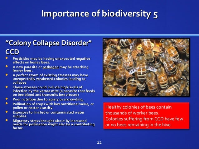 """Importance of biodiversity 5Importance of biodiversity 5 """"""""Colony Collapse Disorder""""Colony Collapse Disorder"""" CCDCCD  Pes..."""