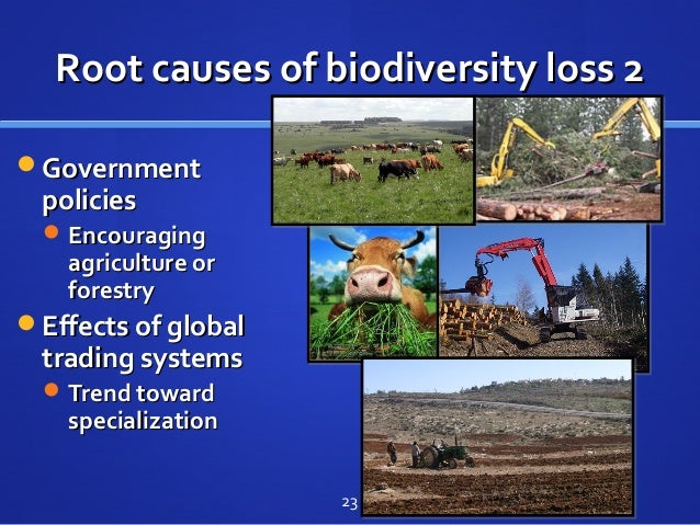 4. What factors lead to biodiversity loss?