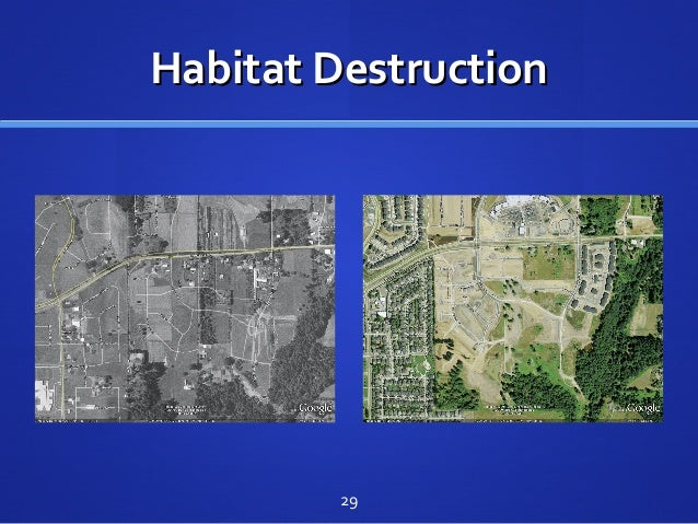 Habitat DestructionHabitat Destruction 29