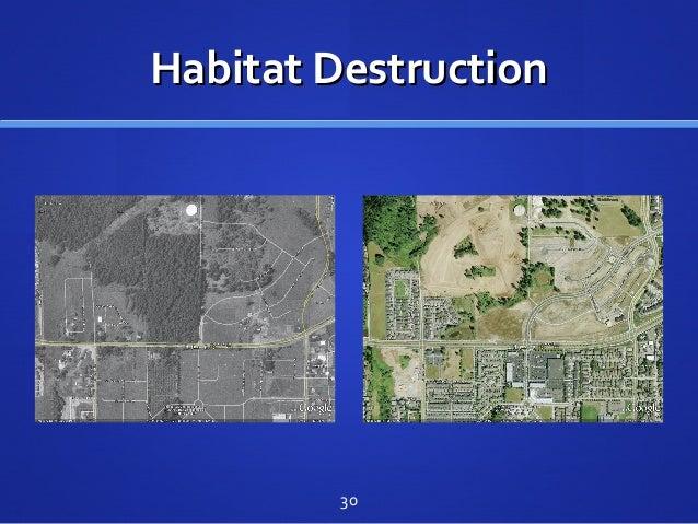 Habitat DestructionHabitat Destruction 30