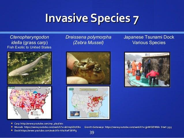 Invasive Species 7Invasive Species 7  Carp http://www.youtube.com/my_playlistsCarp http://www.youtube.com/my_playlists  ...