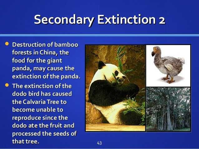 Secondary Extinction 2Secondary Extinction 2  Destruction of bambooDestruction of bamboo forests in China, theforests in ...