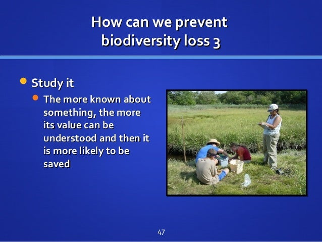 How can we preventHow can we prevent biodiversity loss 3biodiversity loss 3 Study itStudy it  The more known aboutThe mo...